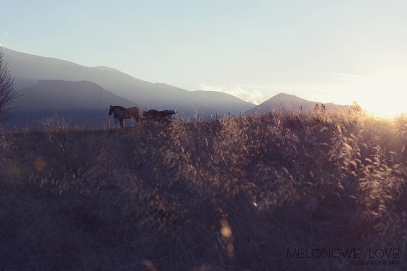 sesja narzeczeńska w górach2,9